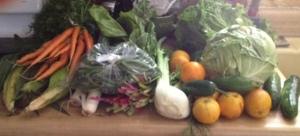 Harvest box 10-14-14